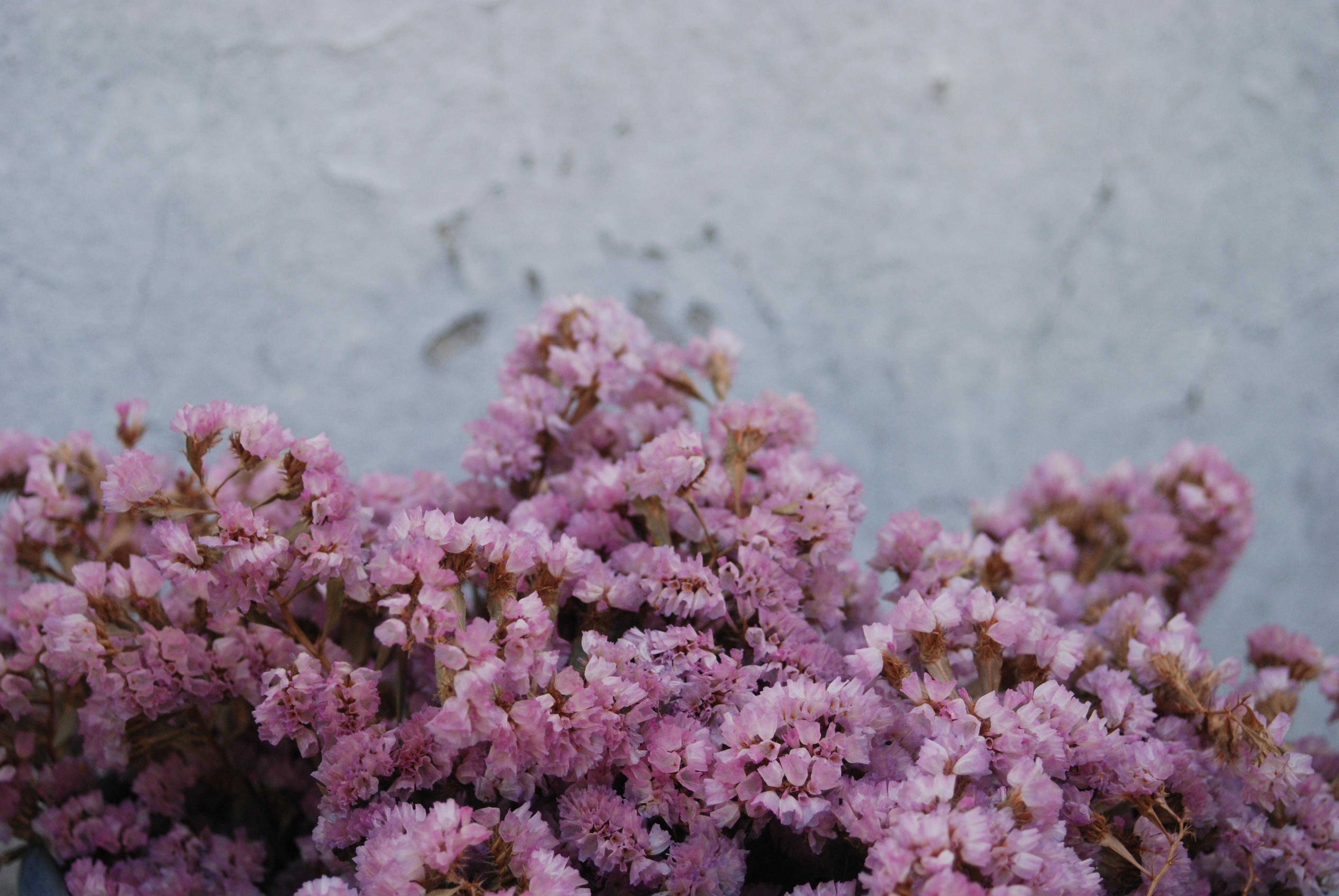 fleurssacadidie